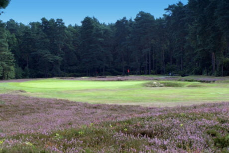 New Zealand Golf Clourse West Byfleet Surrey with IGC London